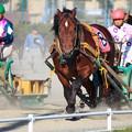 Photos: ばんえい競馬1