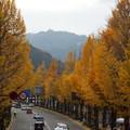 甲州街道から高尾山を望む