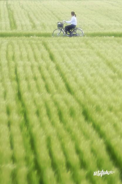 Photos: 印象 麦畑