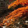 秋の白石神社.4