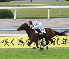 ラルク(2015/11/07 京都6R 2歳新馬)