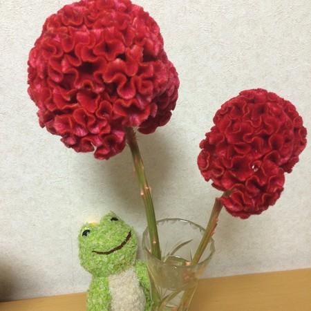 けいとうの花